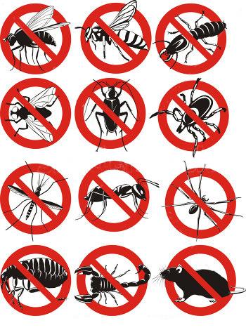 no-bugs-panda-pest